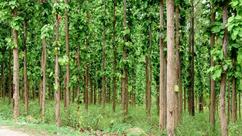 सामुदायिक वन दिवस कार्यक्रम सप्ताहब्यापी रुपमा सुरु